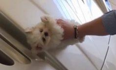 ВИДЕО ЛУДОРИИ:  Млад богаташ со куче го чистел автомобилот