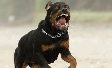 Во Гази Баба куче искасало дете и жена
